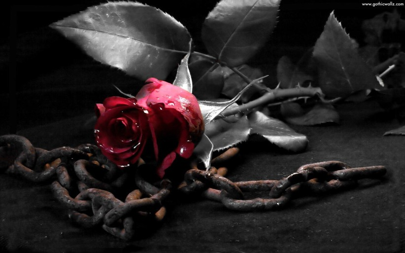 rose-with-metal-chain-wallpaper-www-gothicwallz-com